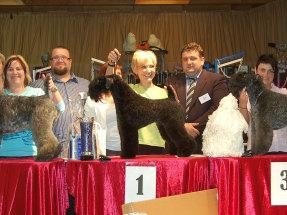 Österreichs 1. Goldmedaille  in der Hundecoiffeur-Profiklasse gewonnen!
