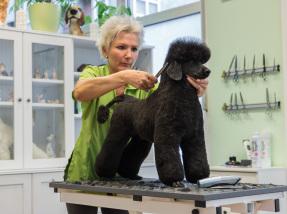 Hundepflege Hundesalon Margit Schönauer