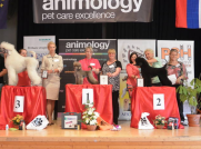 """Silbermedaille """"Animology Grooming Championship"""" in der Slowakei Champion Klasse- Pudel Margit Schönauer Wien"""