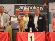 """Best allround Groomer 2013 """"Slovakia Grooming Championship"""" in der Slowakei Margit Schönauer Wien"""