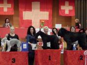 """Goldmedaille """"Schweizer Meisterschaft"""" in der Schweiz Offene Klasse- andere Schneiderasse Margit Schönauer Wien"""