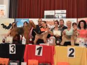 """Silbermedaille """"German Grooming Competition"""" in Deutschland Champion Klasse- Handtrimmen Wien Margit Schönauer"""