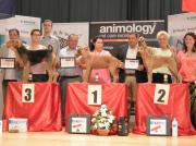 """Silbermedaille """"Slovakia Grooming Championship"""" in der Slowakei Offene Klasse- Handtrimmen Margit Schönauer Wien"""