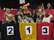"""Silbermedaille """"Belgian Grooming Championship""""  in Belgien Elite Klasse- Handtrimmen Margit Schönauer Wien"""