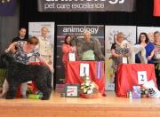 """Goldmedaille """"Animology Grooming Championship"""" in der Slowakei Champion Klasse- andere Schneiderasse Margit Schönauer Wien"""