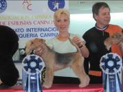 """Finalistin """"Oster Tournament of Champions""""  in Spanien  Champion Klasse- Handtrimmen Margit Schönauer Wien"""