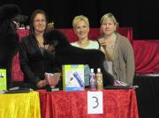 """Bronzemedaille  """"Belgian Grooming Championship"""" in Belgien Offene Klasse- Pudel Margit Schönauer Wien"""