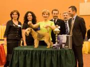 """Best in Show  """"Prago Best"""" in Tschechien Gesamtsieg über alle Klassen und Kategorien Margit Schönauer Wien"""