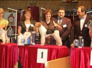 """Silbermedaille  """"Belgian Grooming Championship"""" in Belgien Offene Klasse- Handtrimmen Margit Schönauer Wien"""