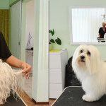 Hundesalon Margit Schönauer Malteser vor und nach der Pflege