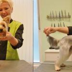 Hundesalon Margit Schönauer Yorkshire Terrier vor und nach der Pflege